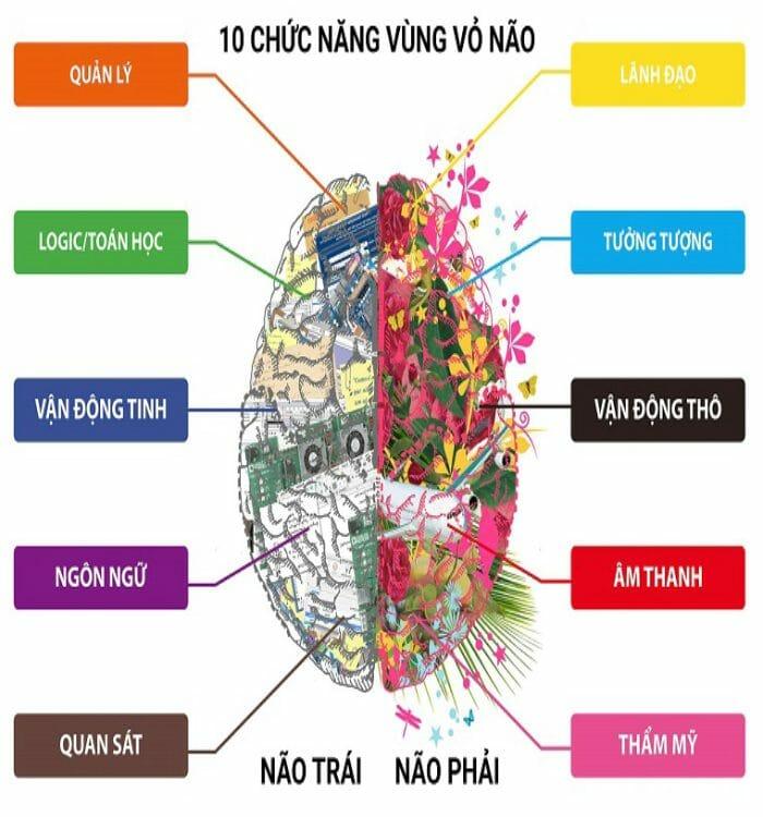 10 Chức năng của não bộ
